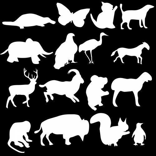 16 Animals