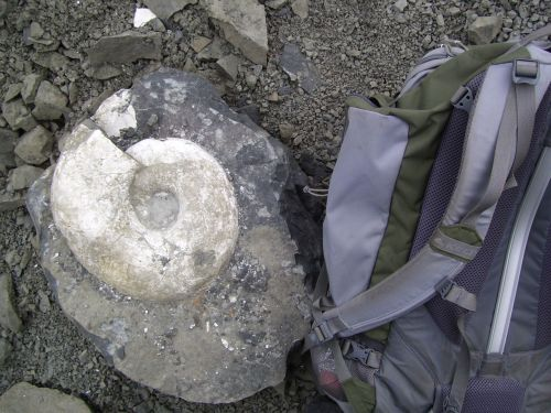 Ammonite And Backpack
