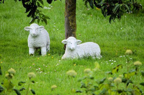 2 Images Sheep