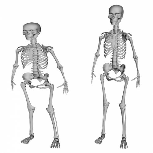 2 Skeletons