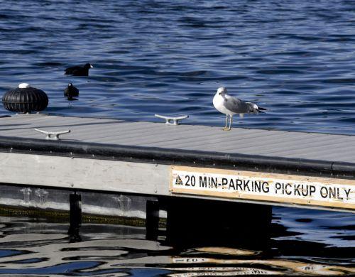 20 Minute Parking