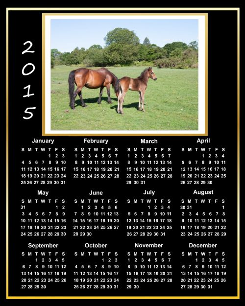 2015 Calendar Beautiful Horses