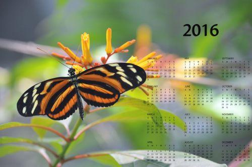 2016 Monarch Butterfly Calendar