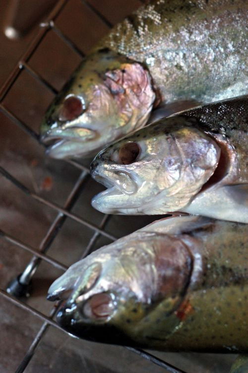 Scary Grilled Trouts