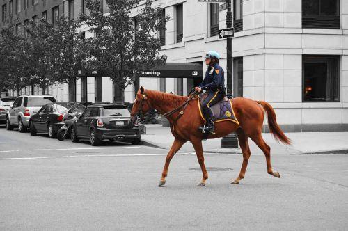 policininkas, constable, Bobby, varis, arklys, gyvūnas, Jodinėjimas, gatvė, naujas, York, Manhatanas, policininkas