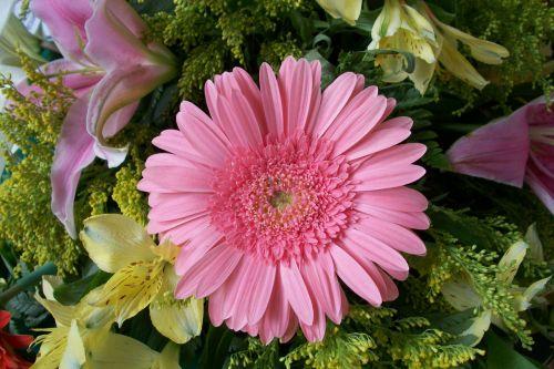 gėlė, gėlės, rožinis, Gerbera, žiedlapiai, grožis, rožinė gerbera