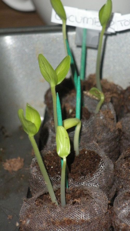 Sprouting Plants For The Garden