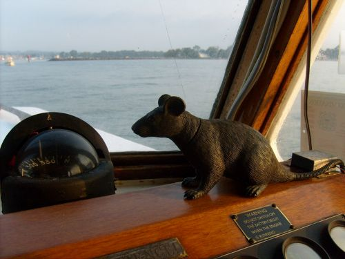 žiurkė, netikrą, valtis, kompasas, vanduo, žiurkė