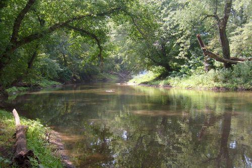 upė, gamta, vanduo, medžiai, saulės šviesa, tingi upė