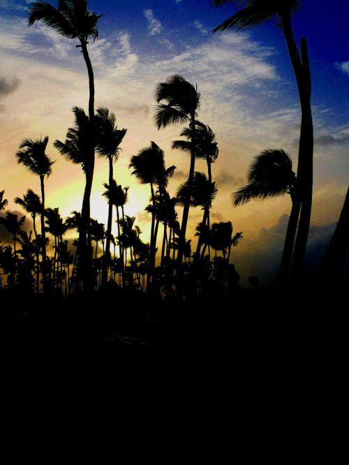 beach,evening,sun,holiday,dominicanrepublic,uveroalto,puntacana,sirenissuites,sea,exoticcountry,hot,summer,beach at sunset