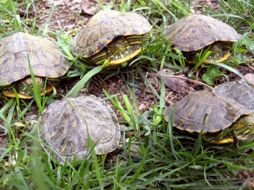 6 Turtles From Ground Level