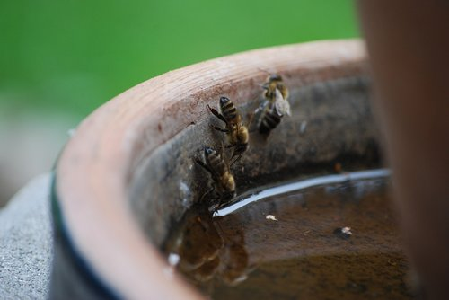 a  evertebrat  insect