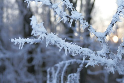 a branch  winter  frost