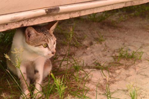a cat staring cat animal