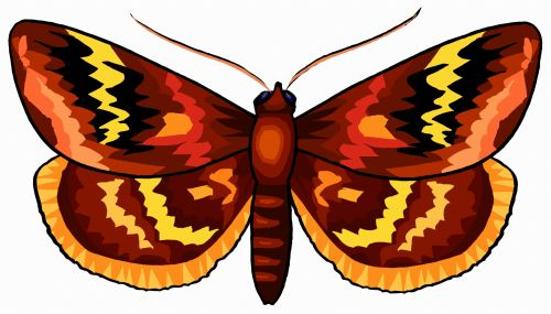 A Colorful Brown Butterfly 7