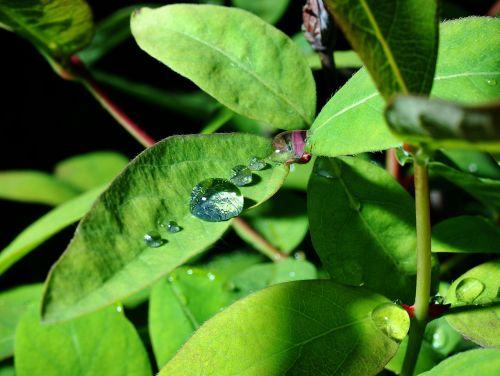 a drop of rain garden