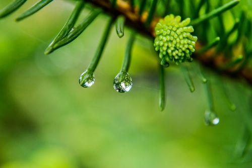 a drop of rain drop of rain
