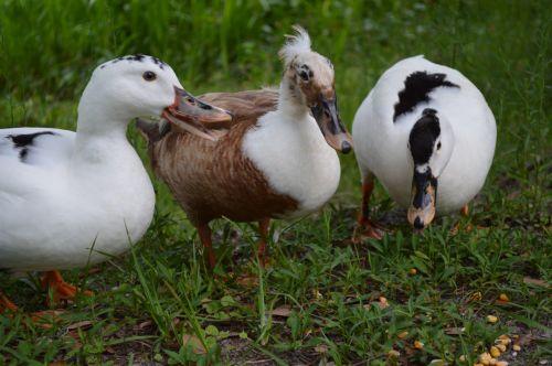 A Feathery Trio