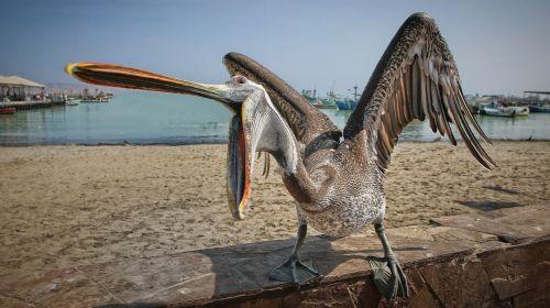 a hungry seabirds the sea panic