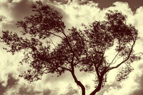ruduo, plikas, debesys, cloudscape, Debesuota, Šalis, creepy, tamsi, miręs, dramatiškas, baisus, priekabiavimas, gale, drumstas, niūrus, pilka, pūlingas, kalnas, žemė, kraštovaizdis, be lapų, vienišas, vienatvė, vienišas, vienišas, nuotaika, paniuręs, gamta, žiaurus, lauke, per naktį, vienišas medis