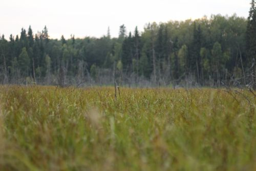 A Marsh With Long Grass