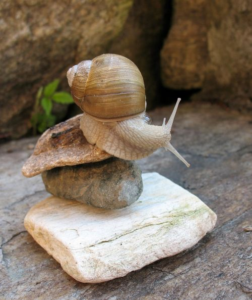 a pet acrobatics snail