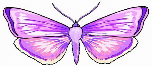 A Purple Butterfly 9