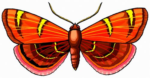A Red Colorful Butterfly 4