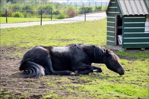 A Rolling Horse