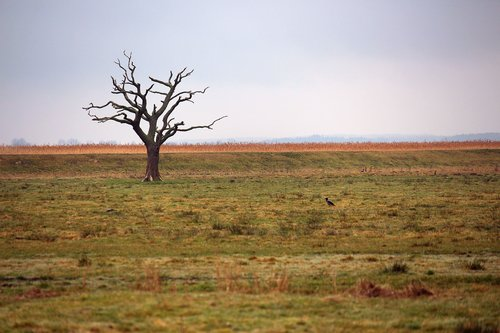 a single tree standing  tree  solitary