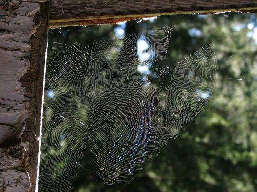 a spider in a cobweb network trap