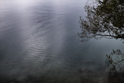 A Tree Over A Water
