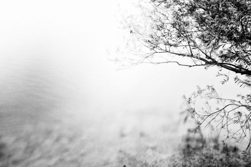 A Tree Over A Water BW