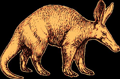 aardvark africa african