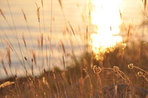 abendstimmung sunset halme