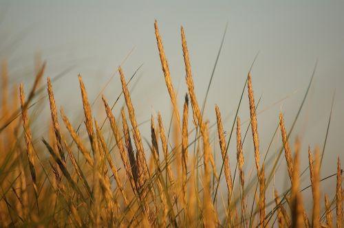 abendstimmung dune beach