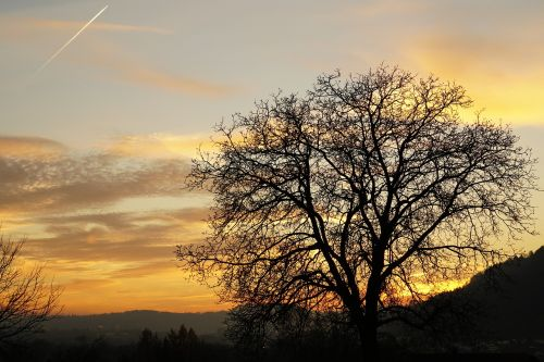 abendstimmung tree twilight