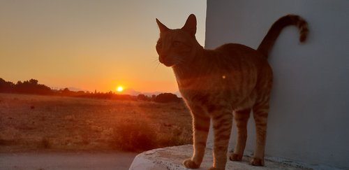 abendstimmung  cat  summer