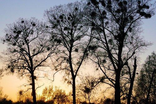 abendstimmung  sunset  nature
