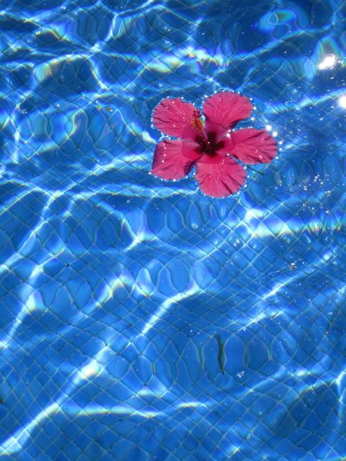 abstract flower body of water