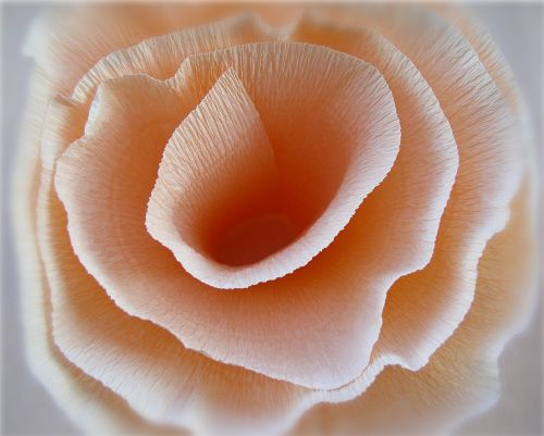 abstract rose paper rose
