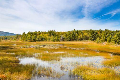 Acadia Wetlands