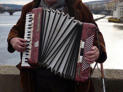 accordion the harmony playing