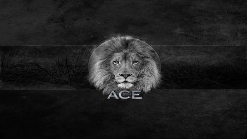 design lion wallpapper