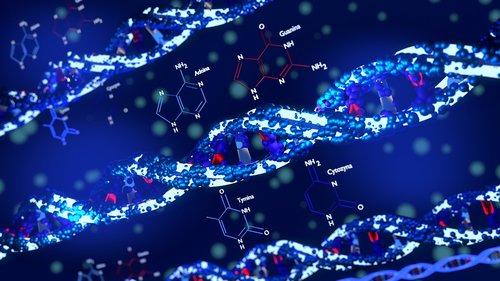 acid deoksyrybonukleinowy  join adenine  guanine