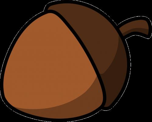 acorn nut seed