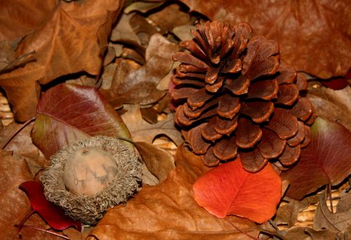 Acorn And Pine Cone In Fall Leaves