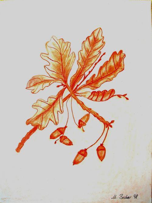 acorns branch tree