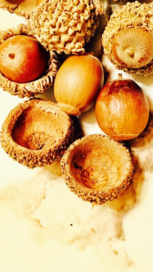 acorns seeds groceries