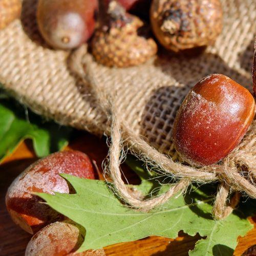Acorns And Oak Leaf